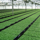 Salad cress greenhouse
