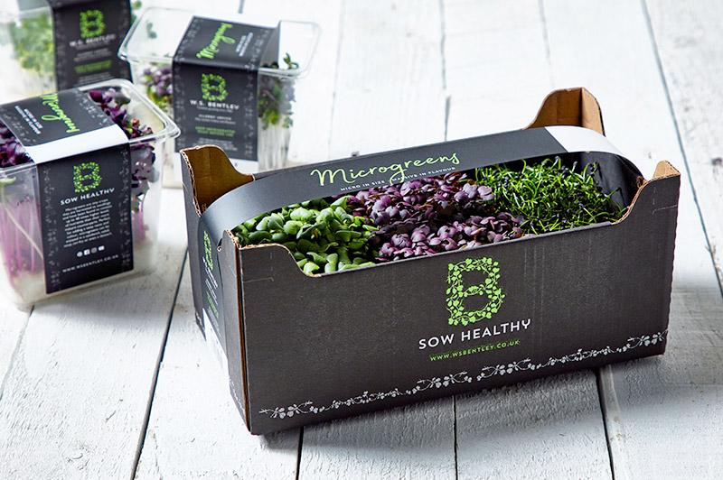 B Sow Healthy Microgreens