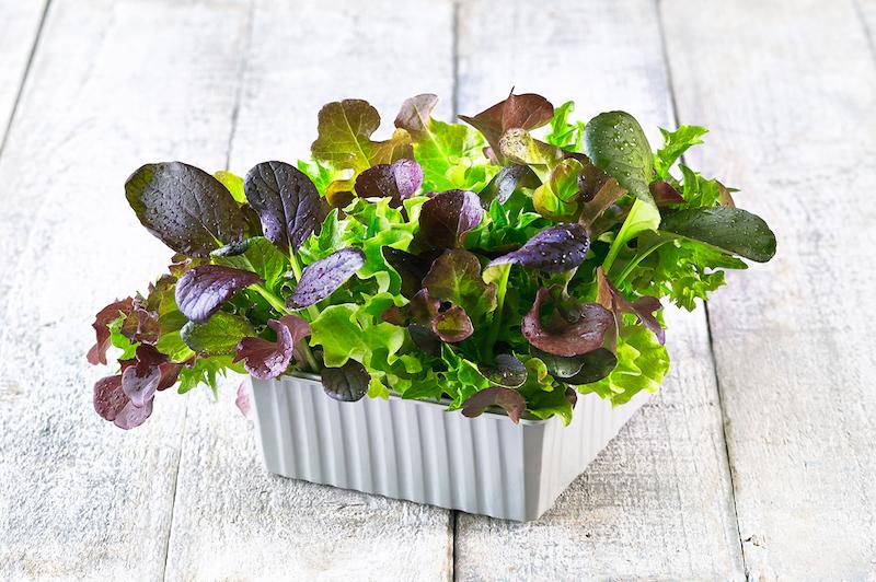 Living Salads