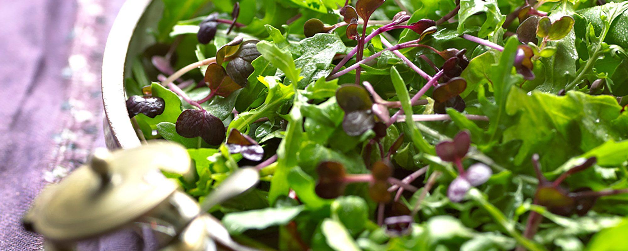 Fresh salad with microgreens