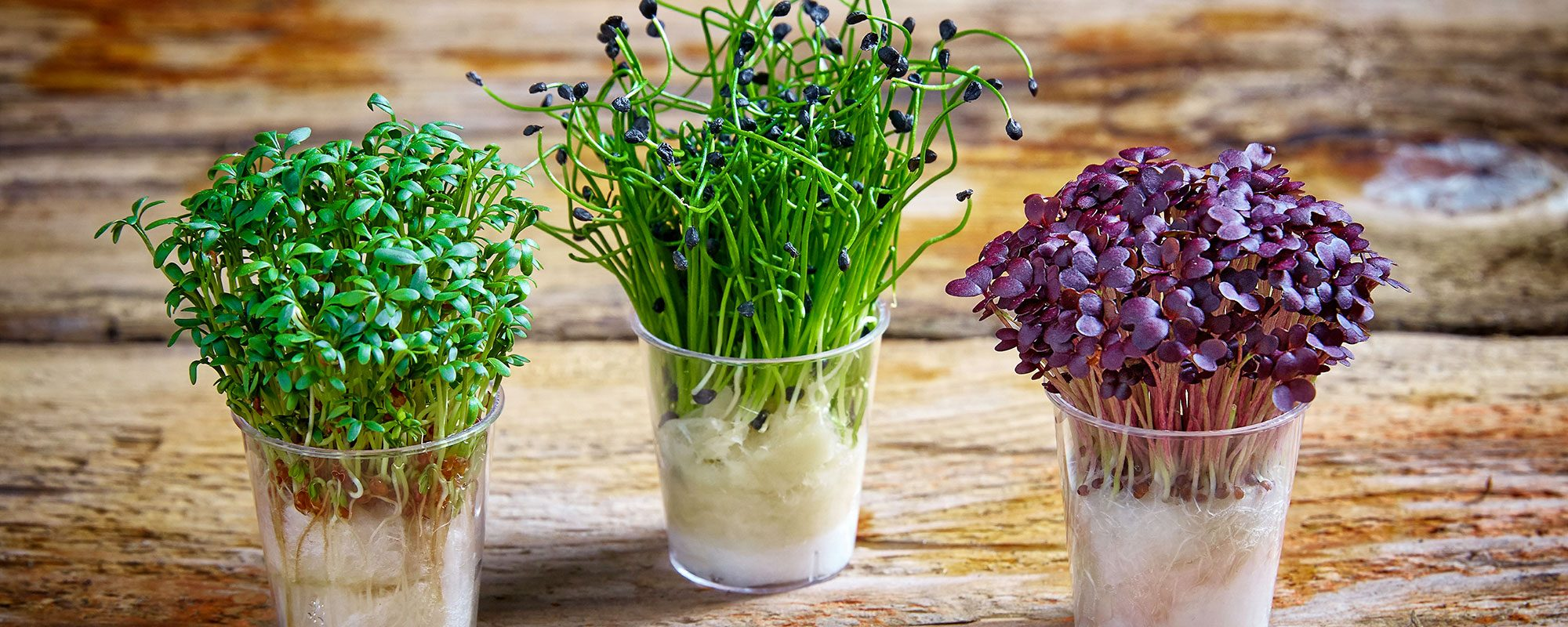 _How-to-grow-cress-banner