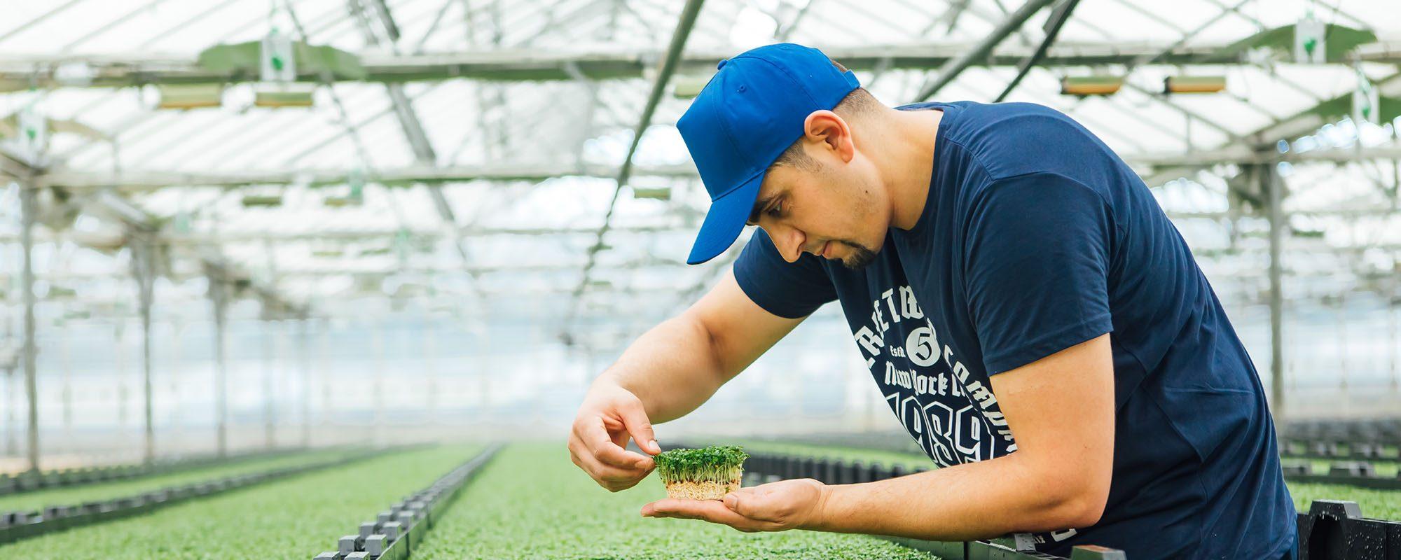 How to grow salad cress